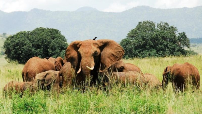 2. safari in uganda_Kidepo Valley National Park_01